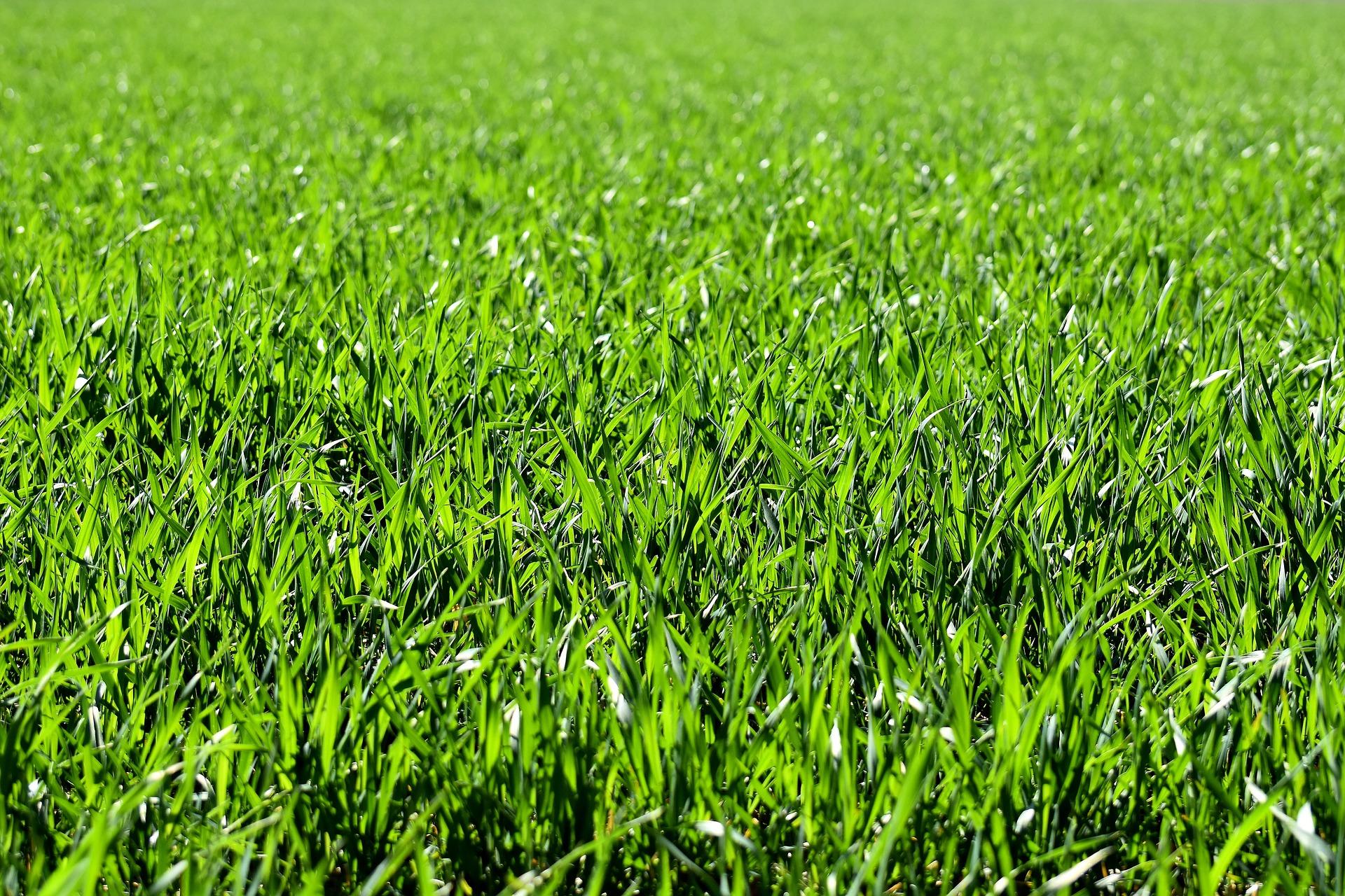 Finca rústica uso agrario – en Xuncos, Ribadeo