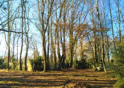 Parcela con árboles autóctonos